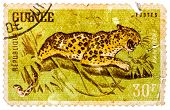 Stamp Printed In Guinea From The