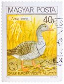 Stamp Printed In Hungary Shows Graylag Goose, With The Inscription