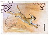 Stamp Printed In Ussr (russia) Shows A Image Of A Endangered Animal With The Inscription