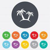 Palm Tree sign icon. Travel trip symbol.