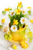 Spring flowers and green grass in a pot and Easter  eggs and rabbits