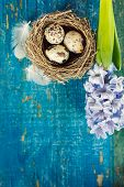 quail's eggs in a nest on blue wooden board