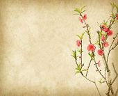 stock photo of fragile  - Spring peach blossom on Old antique vintage paper background - JPG
