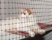 White Cat With Red Spots Sits In Cage