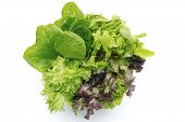 stock photo of hydroponics  - Fresh hydroponic salad on the white background - JPG
