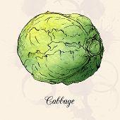 Hand drawn cabbage