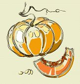 Vector Hand Drawing Juicy Pumpkin