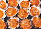 Baked Scallops Background