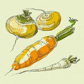 Vector hand drawing realistic juicy vegetables