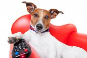 picture of home theater  - dog watching tv or a movie sitting on a red sofa or couch with remote control changing the channels - JPG