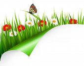 Spring background with flowers, grass and a butterfly.