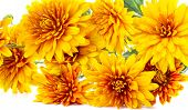 Bouquet Of Yellow Asters