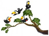 Illustration of four toucans on the tree