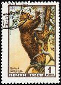 Brown Bear Stamp