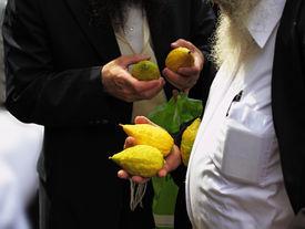 stock photo of sukkoth  - Religious Jews chooses ritual plant  - JPG