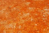 Orange Bacteria Mat