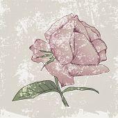 Vintage Grunge Rose Background