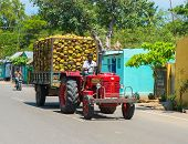 Madurai, India - February 17: Indian Rural Man Rides On A Car With Coconuts. India, Tamil Nadu, Near