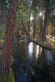 Fast Moving Stream Hat Creek Lassen National Forest