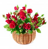 bouque red roses in bucket. Isolated on white background