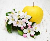 stock photo of apple blossom  - apple and apple tree blossoms on a wooden background - JPG