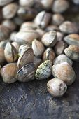 foto of clam  - Close up of clams in a fish shop