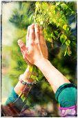 image of adoration  - Spring prayer  - JPG
