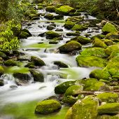 stock photo of gatlinburg  - Silky stream captured in the Smoky Mountains during springtime - JPG