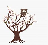 cute owl on a tree