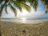 foto of beach-house  - tropical beach with coconut palm - JPG