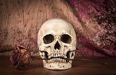 stock photo of eye-sockets  - Still life white human skull on wooden table - JPG