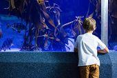 stock photo of algae  - Young man looking at fish and algae tank at the aquarium - JPG