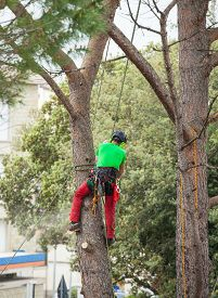 stock photo of man chainsaw  - Man with safety equipment and chainsaw pruning pine tree. ** Note: Shallow depth of field - JPG