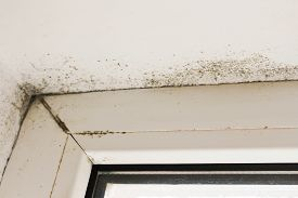 pic of spores  - Mold near a window in the house - JPG