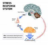 Stress Response System poster