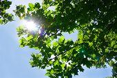 Tree Sky Sunlight